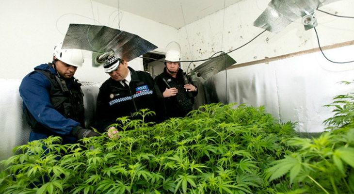 Securing Your Cannabis Factory